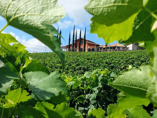 Vinhos Micheletto - Sítio Santa Rita
