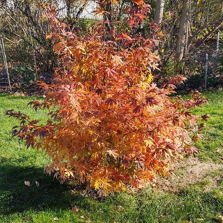 Camillus, NY: Autumn colours