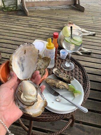 Praia do Sonho, SC: Ostras maravilhosas e camarão a Milena graúdo! Tudo isso de frente para mar!!