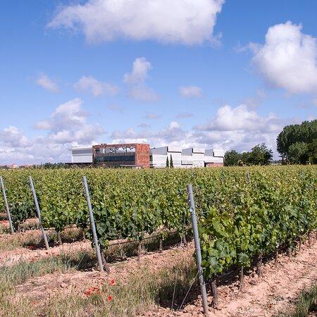 Aranda de Duero, Španělsko: Nuestra bodega integrada en las 87 hectáreas de viñedo en un solo pago.