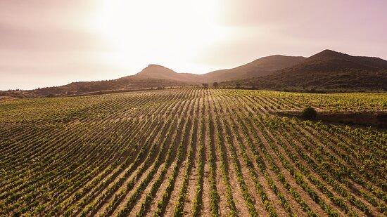 Monemvasia Winery Tsimbidi