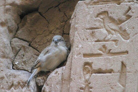 المنيا, مصر: Al Minya 65