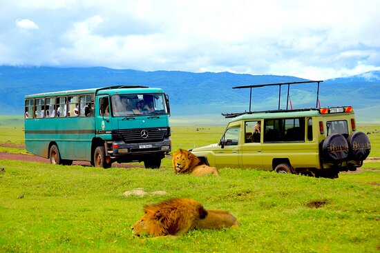 Ngorongoro Conservation Area, Tanzania: Ngorongoro Crater is the best place in Africa to spot  lions