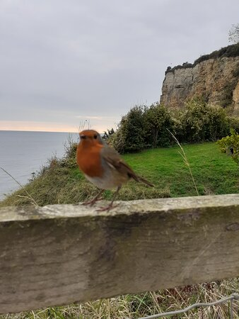 Here is the resident robin!