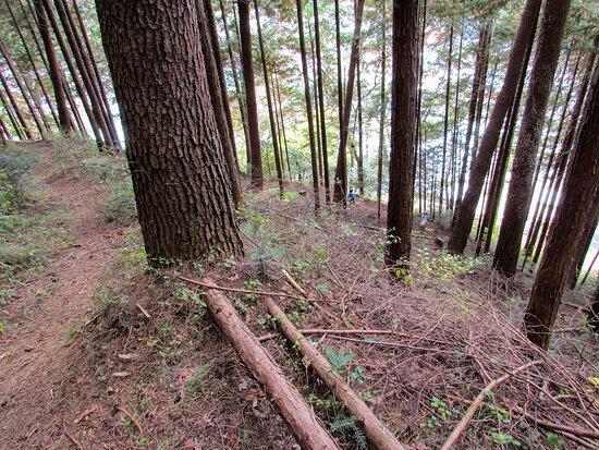 Former Kosuge Castle Site