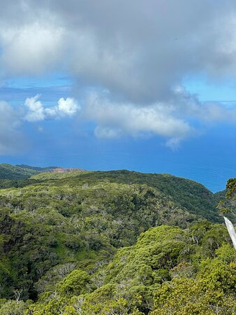 Koke'e State Park, HI:  View from the trail