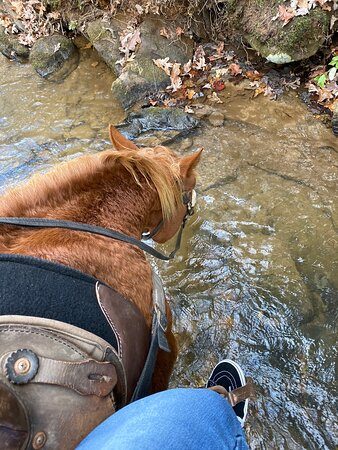 Best horseback riding trip we've ever done!