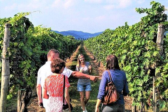 从Euganean Hills的威尼斯葡萄酒之旅