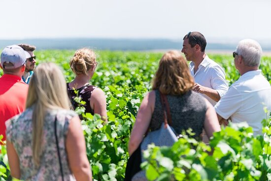 Dégustation de vins de Bourgogne à Chablis avec des établissements...