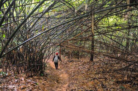 Ba Ria, Vietnã: Day trekking to Dinh Mountain, Vung Tau https://www.dulichhanhtrinhviet.com/2020/10/trekking-tour-nui-dinh-vung-tau.html