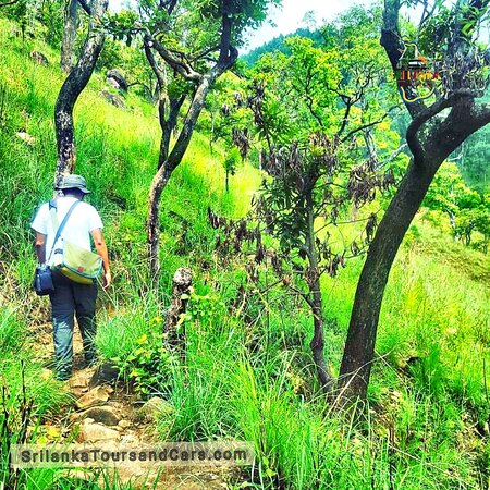 Srilanka  @Hiking  @Taking   @Mountain  Explore Srilanka holidays and discover the best time and places to visit. | Rising dramatically from the central plains, the enigmatic ocean  More details