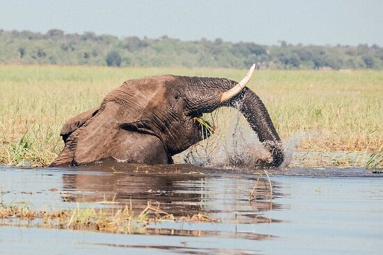 3-Day Wildlife Photo Safari in Chobe...