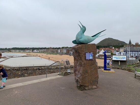 Arctic Tern Statue