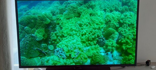 PADI Discover Scuba Dive Experience: Coraux