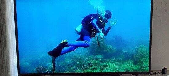 PADI Discover Scuba Dive Experience: Plongeur