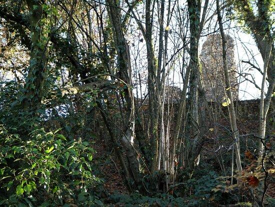 Alt-regensberg Castle