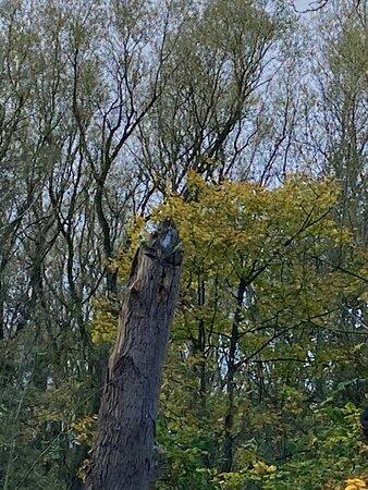 parokeet wild in manchester area