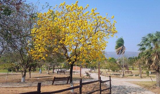 San Jose de Chiquitos, Bolivia: árboles y caminos