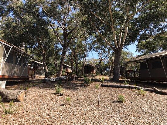 Port Stephens Koala Sanctuary