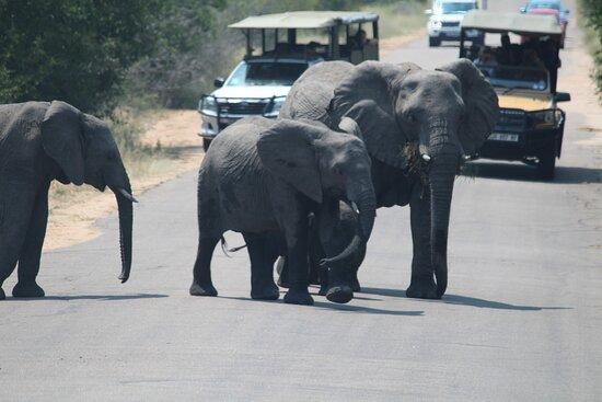 Kruger Safari Africa