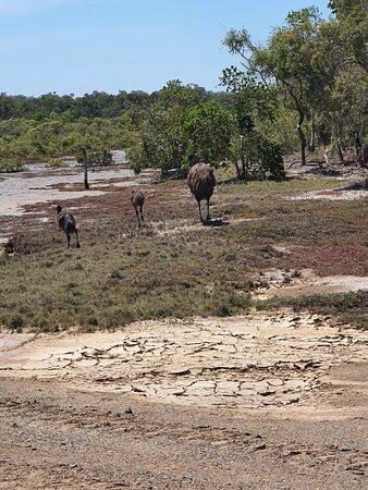 Coowonga صورة فوتوغرافية