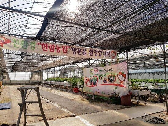 Hanfarm Farm