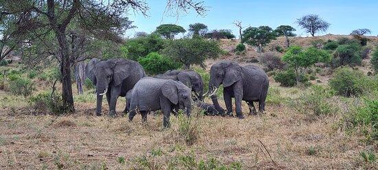 Karani Expedition Safaris