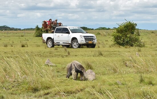 Wild Llanos Tours and Safaris