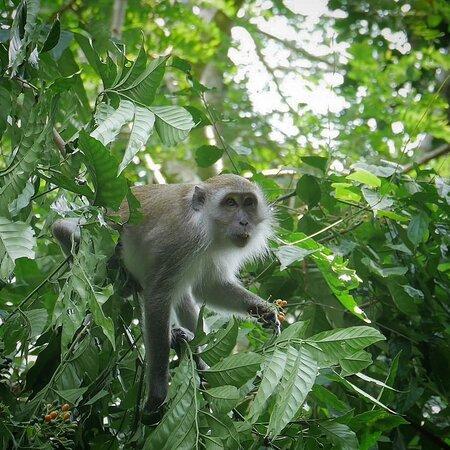 Jungle Boy - Trekking guide