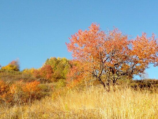 Daiano, Italien: Novembre.. A colori..