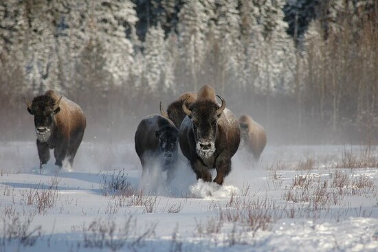 5 Day Yellowstone and Grand Teton Winter Tour - Private Small Group...
