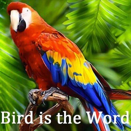 Batavia, IL: Bird Is The Word