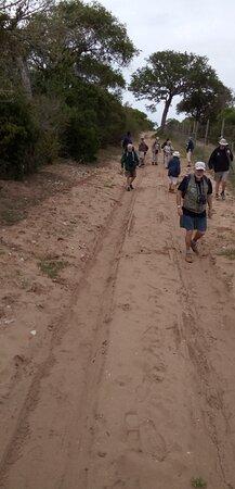 Tembe Elephant Park 사진