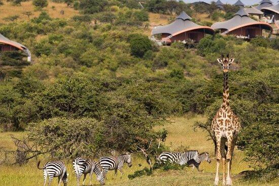 Kruger Adventures Kenya
