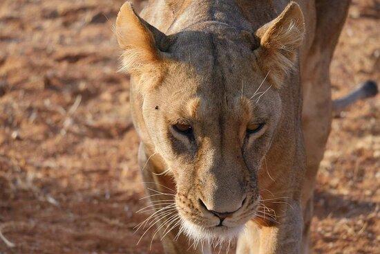Safari Expeditions