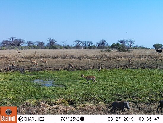 Provincia de Gaza, Mozambique: This is How our park becomes when the rainy season arrives! Amazing Wildlife at Banhine Ntional Park