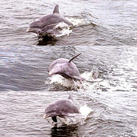 Pier Dolphin Cruises
