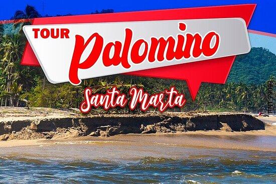 Palomino Tour