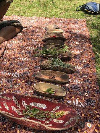 Margaret River Canoe Tour Including Lunch: Instructional plant information.