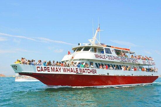 Crociera di avvistamento di balene e delfini da Cape May