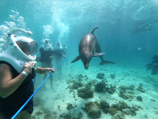 Smith Bay, St. Thomas: Dolphin trek