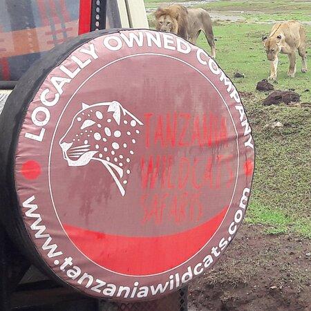 Ngorongoro Crater Tanzania Home of  lions