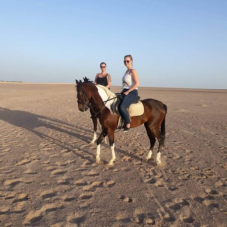 It is no matter whether they can already ride or are beginners We have the suitable horse for every step of experience
