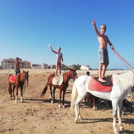 Hurghada, Ai Cập: It is no matter whether they can already ride or are beginners We have the suitable horse for every step of experience