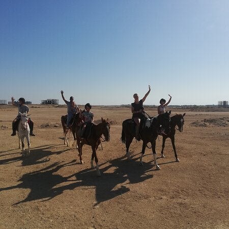 Hurghada, Egipto: It is no matter whether they can already ride or are beginners We have the suitable horse for every step of experience