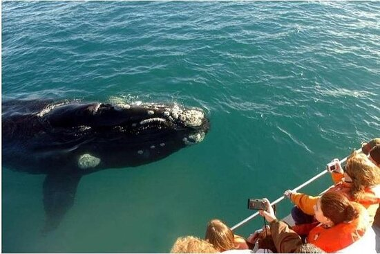 Samana Whales Tours