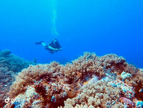 Fun Dive for Certified Divers (3 dives or 2 dives + trekking): CRYSTAL ROCK