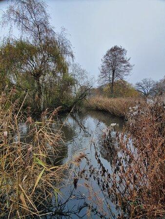 Peg's Pond