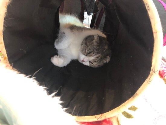 Cat Cafe Nekochan to Issho