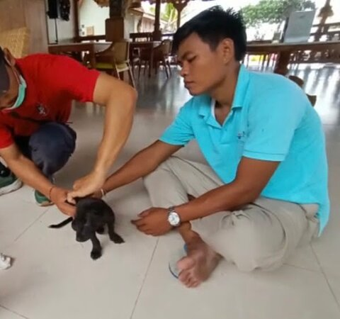 The staffs helped us to arrange a vet visit to help a baby dog.